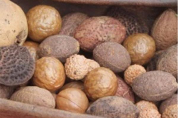 Nut Production (BHT219)